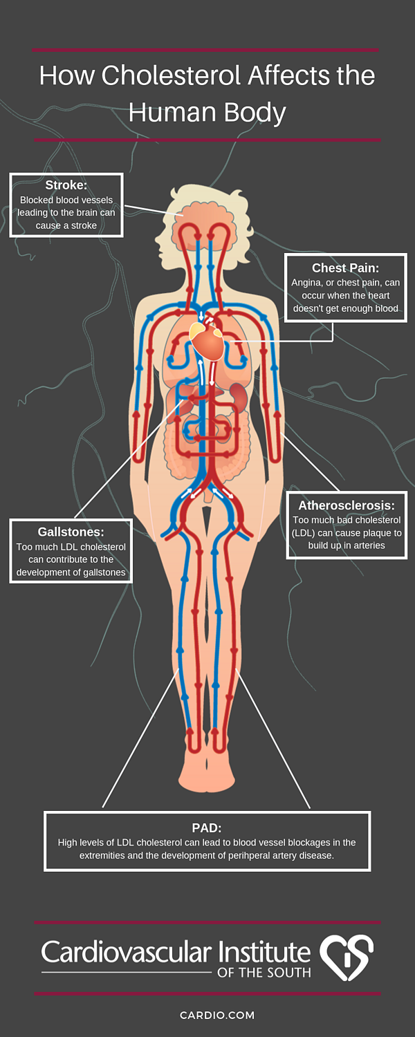 How Cholesterol Affects the Body
