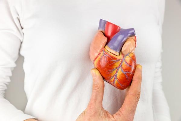 woman holding heart model