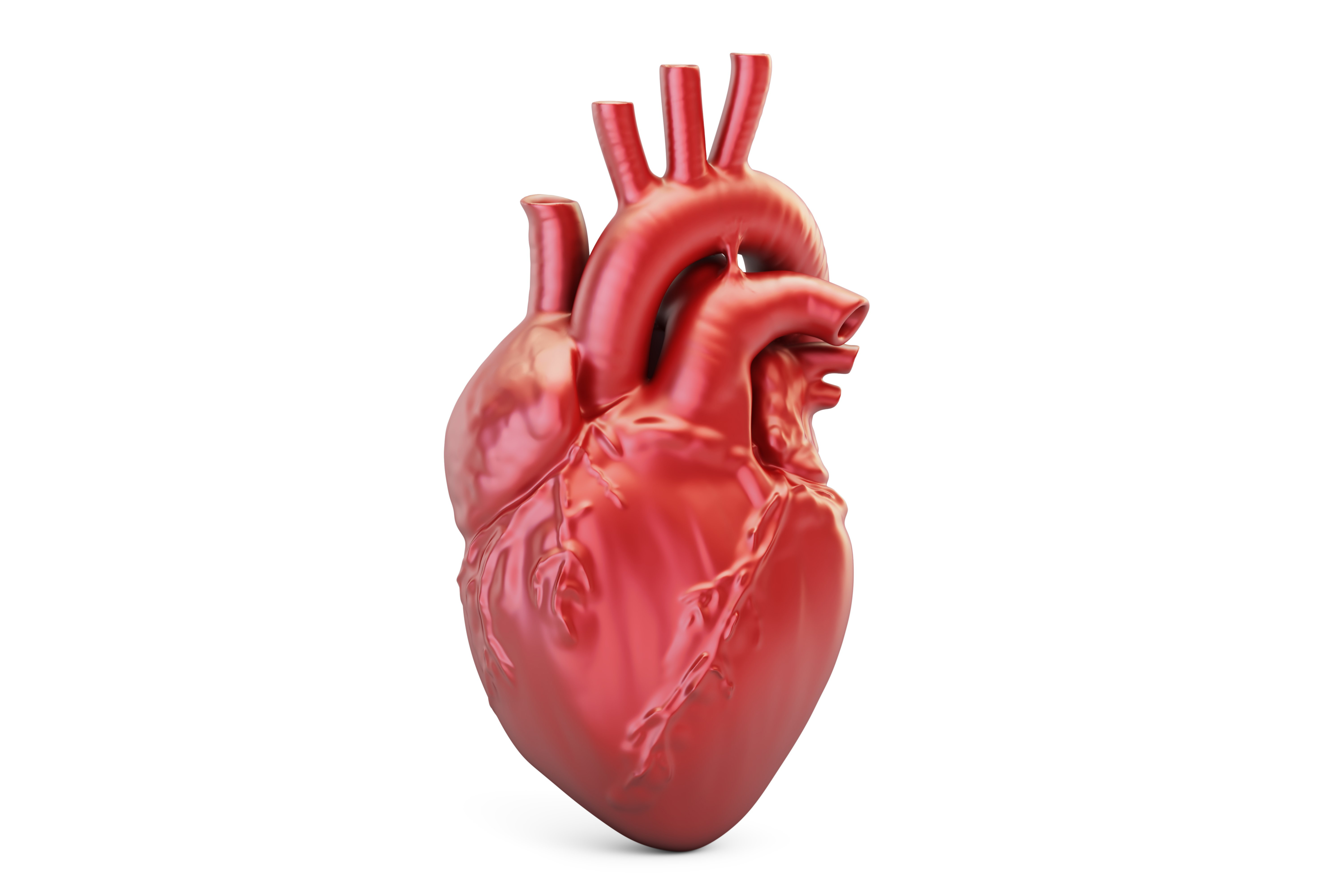 Understanding Your Heart and How it Functions